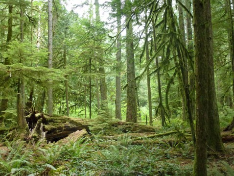 Cathedral Grove 3
