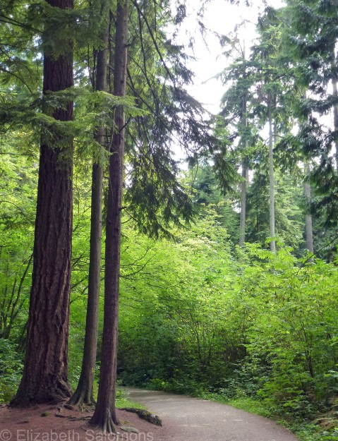 Stanley Park Forest 3