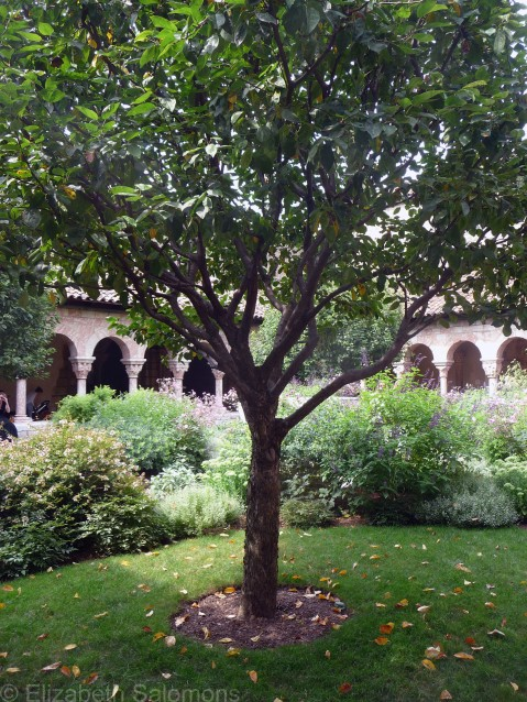 The Cloisters 3