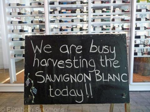Sauvignon Blanc Harvest