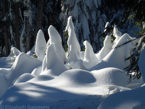 Cypress Snowy Trees 1