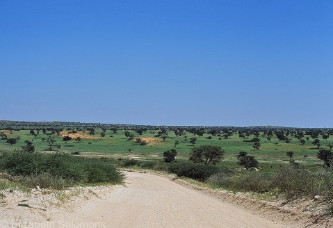 A typical road in Kgalagadi Transfrontier Park