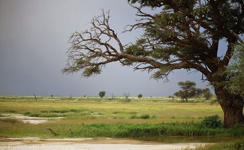 Kalahari Horizon