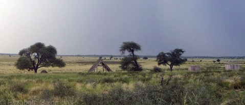 An unfenced campground on the Botswana side of Kgalagadi Transfrontier Park. You can just make out our tents below the camel thorn tree at far left.